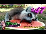 Мега ржачные животные #47  Смеяка хаха Смотреть Всем Новые приколы про животных Т ...