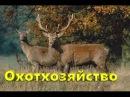 Пример успешного охотхозяйства в Латвии