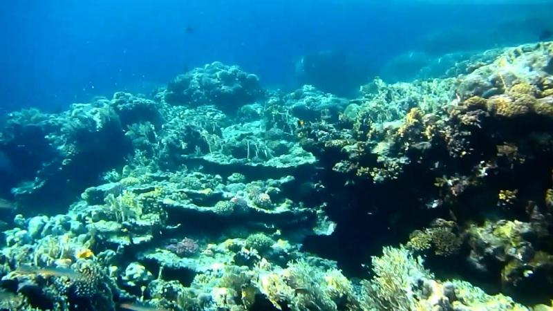 Внешний риф отеля Three Corners Fayrouz сентябрь 2014