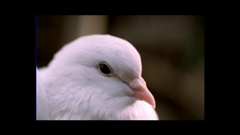 Гибель империи. 2-я серия Чёрный голубь