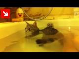 Кот принимает ванну!  Смотреть видео онлайн в Моем Мире..mp4