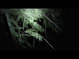 Ведьма из Блэр Новая глава 2016 D HDRip (line)
