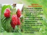 Павлов &amp Котов (Кафе МалинА)