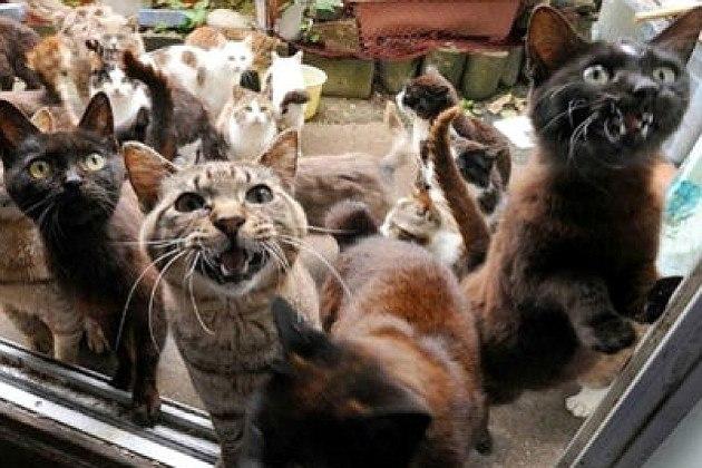 В России, в Омске  40 домашних котов съели пенсионера