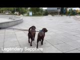 Путешествие Лабрадоров по одному из красивейших городов мира - Тбилиси. (Круиз Лабрадоров часть 4)