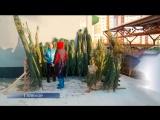 Где в Тюмени купить ёлку? Смотрим ТСН-итоги 15 декабря
