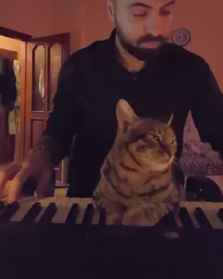 Кот и пианист