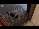 Воспитанная собачка, вытирает лапки