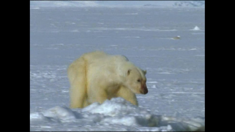 BBC Голубая планета. Замерзшие моря - BBC The Blue Planet. Frozen seas (2001)