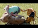 Best of Extreme Trained Disciplined Dogs