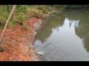Рыбалка на речке на куриную печень.