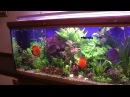 Шикарный аквариум на 600 литров
