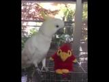 Попугай разговаривает с игрушкой