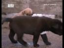 серия 111. dog_whisperer_10_s5 cesar_and_the_horse_whisperer