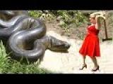 Giant Anaconda Attacks Human Caught on Camera | Biggest Python Snake Attacks Human - Python Attacks