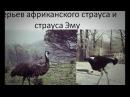 Чистяков Виктор Сергеевич Золотая осень в Петергофе