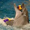 Дельфинарий в Челябинске около ТРК Горки