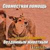 """Совместная помощь животным в г.Перми """"Локи"""""""