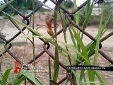 Ядовитый паук атакует жителей юга Челябинской области