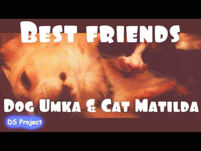 【OFFICIAL】DS Project - Dog Umka Cat Matilda「Best friends」