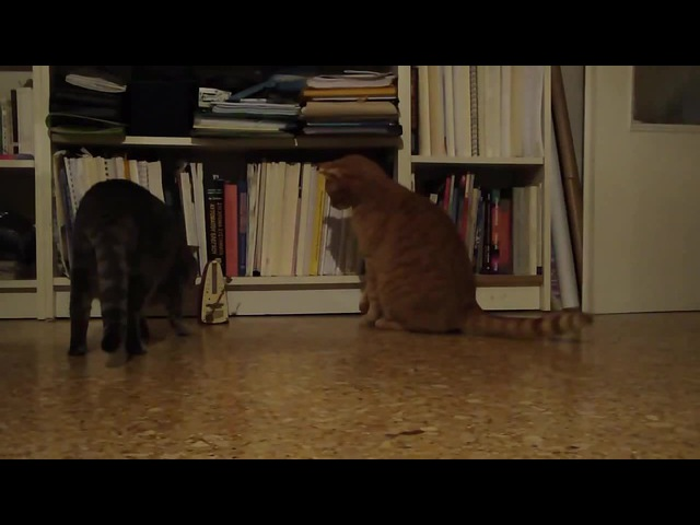 Cats and the Metronome