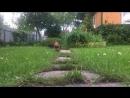моя охранная собака 😁