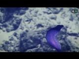 Прямая трансляция со дна марианской впадины (Online intrerview from the Ocean)