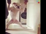 Собаки, которые не любят мыться.