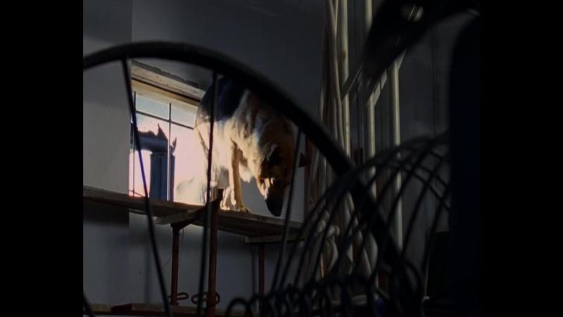 Комиссар Рекс 12 сезон 7 серия (133) Последняя ставка