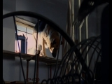 "Комиссар Рекс 12 сезон 7 серия (133) ""Последняя ставка"""