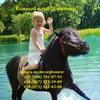 """Конный клуб """"Кентавр"""". Верховая езда, конные про"""