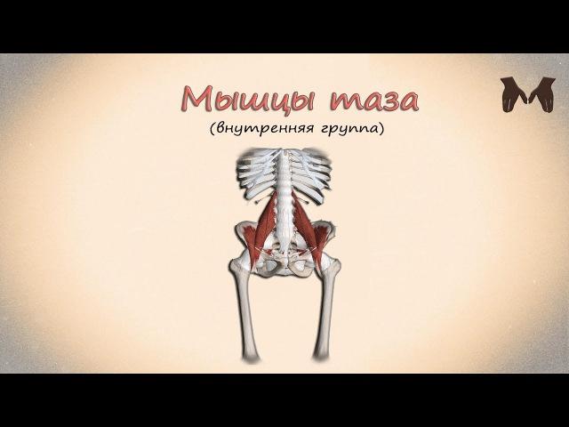 Мышцы пояса нижней конечности (мышцы таза: внутренняя группа) - детальный обзор 3д