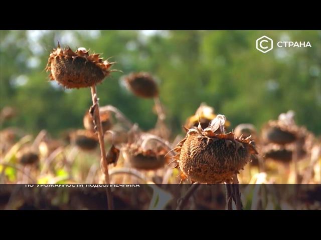 Жидкое золото | Спецпроект | Телеканал «Страна»
