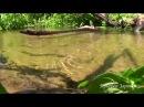 Лесной ручей. Источник, Звук ручья, Шум ручья, Звуки природы. Шум воды. Пение птиц. Горный ручей.