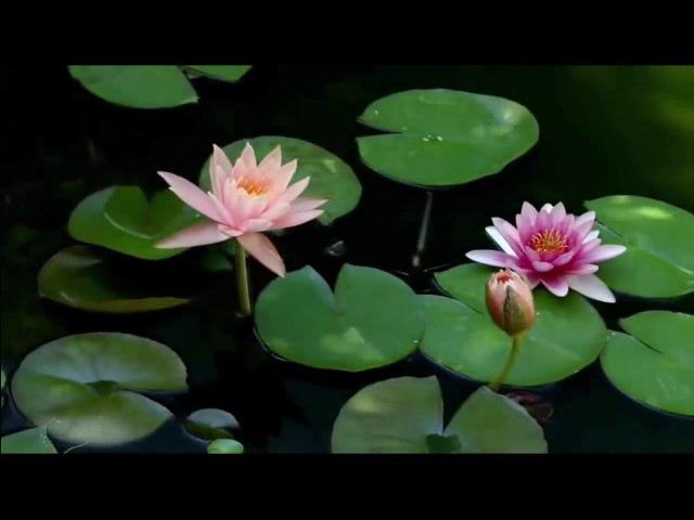 Ведическая волшебная музыка Рага. Вибрации Природы. Глубинная целительная релаксация. Гандхарва Веда