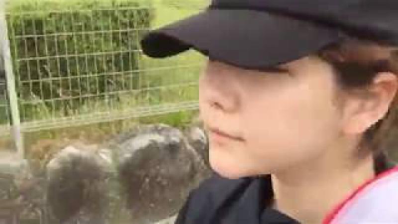 2017年05月21日 村重杏奈(HKT48 チームKIV) 12時間49キロマラソンやってます! SHOWROOM あーに12