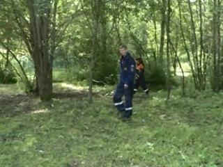 В Шекснинском районе разыскивают заблудившуюся в лесу женщину