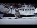 animals in slowmo. time shift. CATS Part 1! КОШКИ Часть 1