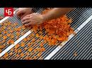 СУШИЛКА ДЛЯ ФРУКТОВ и овощей своими руками Как сделать хорошую инфракрасную электросушилку ПРОСТО
