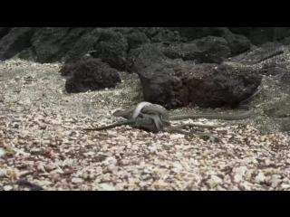змеи чики-брики