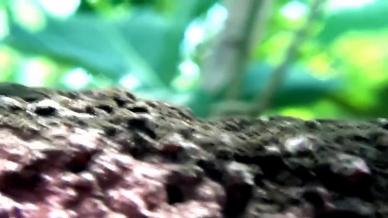 Обман в мире животных. Чудеса мимикрии