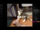 Смешные Коты ДО СЛЕЗ Приколы с Котами Кошками 2017-save4