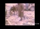 Victoire des FAR à la bataille dAmgala prisoniers algeriens