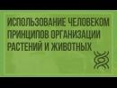 61 Использование человеком принципов организации растений и животных. Видеоурок по биологии 11 класс