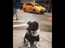 Nina Dobrev on Instagram Maverick does New York BlueSteel @