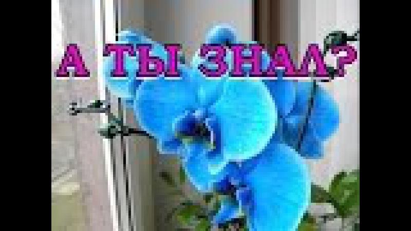 ОСТОРОЖНО! Секрет синей орхидеи