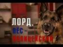Лорд. Пёс-полицейский 13 Серия