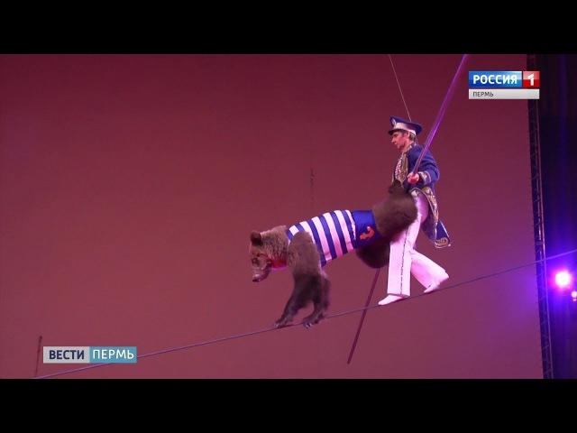 В Пермском Цирке - медведи-канатоходцы