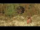 Daisies 1966 Official Trailer Full HD 1080p