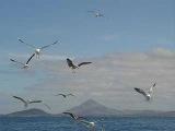 Santoz meets Pedro del Mar - Seagulls (original mix)